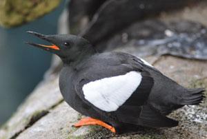 Les Oiseaux du Biodôme à Montréal - Billet nature sur le blog Birds & Bicycles