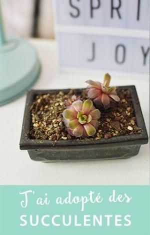 """J'ai eu envie d'adopter plus de plantes vertes après avoir feuilleté le livre """"Urban Jungle"""". Je vous parle de cette tendance sur le blog!"""