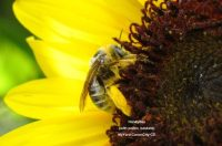 Join the Great Backyard Bee Count - Birds and Blooms