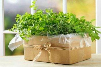 Gardening Gardening Basics Cardboard Gardening