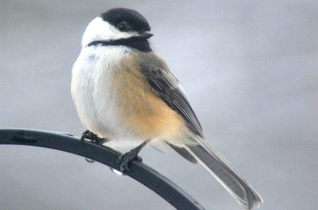 Attracting Birds | Feeding Birds | Feeding Friendly Birds