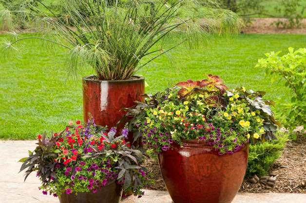 Container Gardening Ideas Small Space Gardening Best Container