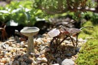 How to Make a Mini Garden   Backyard Projects - Birds and ...