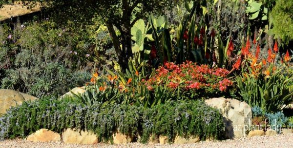 drought-tolerant gardens ugly