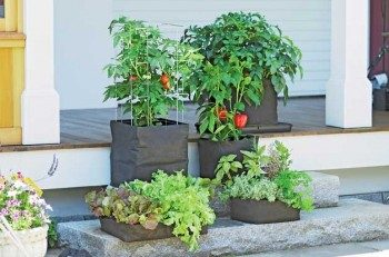 Gardening Made Easy Alternative Gardening Ideas Birds And Blooms