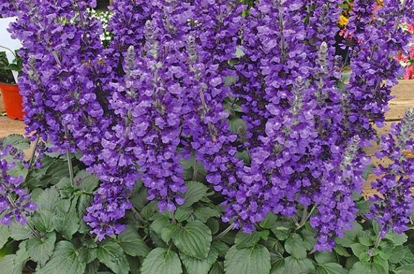 purple plants flower