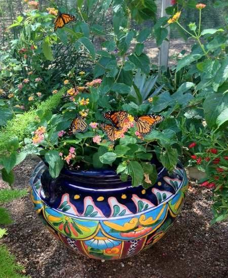 ideas container gardening