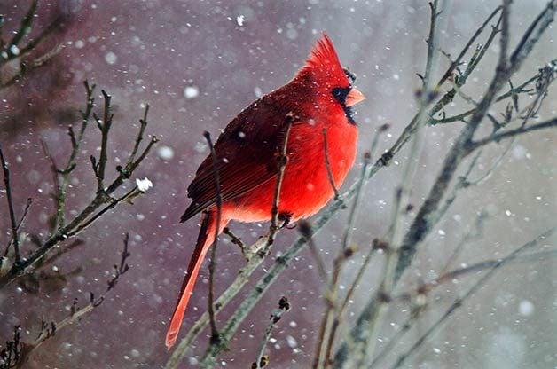 Falling Feathers Wallpaper 51 Best Winter Bird Photos Ever Birds And Blooms