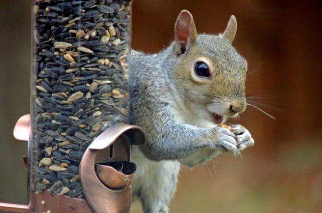 Irish Spring Soap Squirrel Repellent