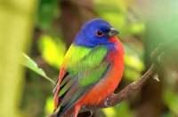 Backyard Birding Magazine | Outdoor Goods