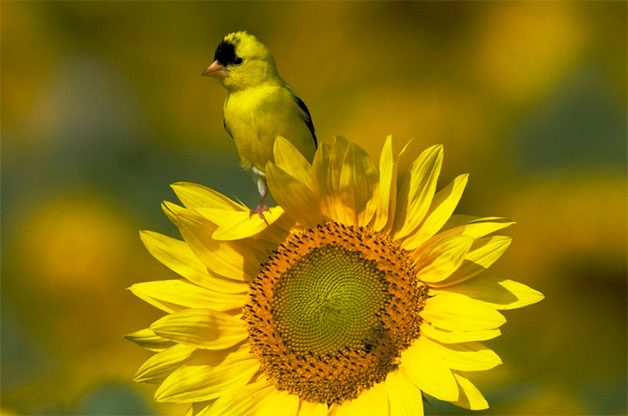 Bird Feeding | Feeding Wild Birds - Birds & Blooms
