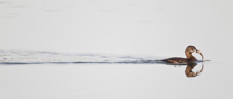 The Wake Shot « Arthur Morris/BIRDS AS ART