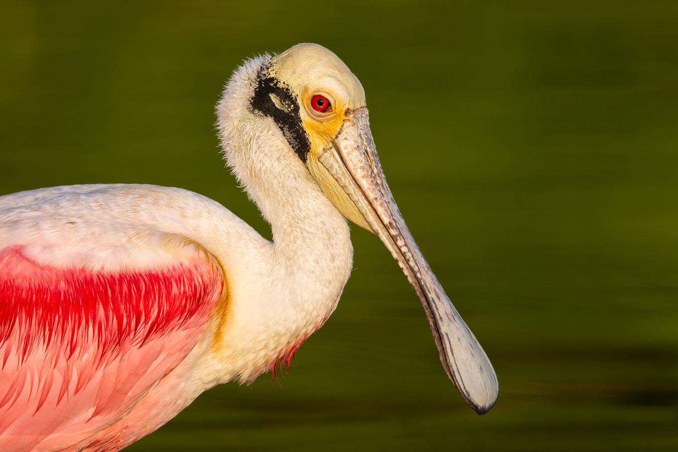 https://i0.wp.com/www.birdsasart-blog.com/baa/wp-content/gallery/contest/v572vymzdudojyweoxdqzdqmyqsjdevdyjessob5zzy2dexyesqvqe5vyz5v2y7qddoybr7x.jpg