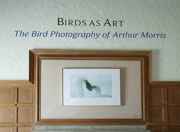 Kvelling And Catching Arthur Morris Birds Art
