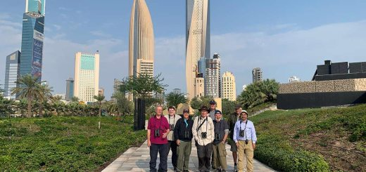 10-18 November 2019 Kuwait Birding Tour Participants: AbdulRahman Al-Sirhan (tour guide), Jim Christensen, Anders Hammergart, Anders Sogaard, Steffen Sommer Nielsen, Paul Nilsson, Richard Beard, and Neil Clayton.