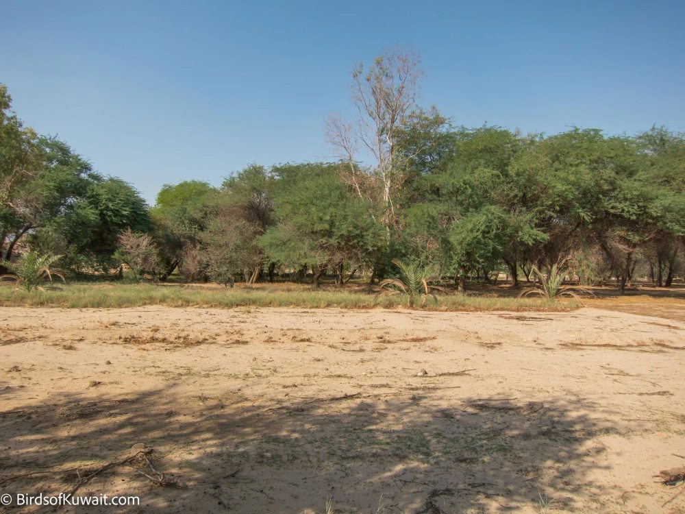 Al-Abraq Farm