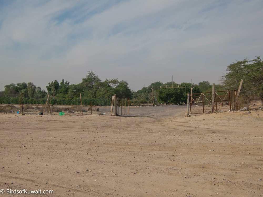 Al-Shallal's Farm