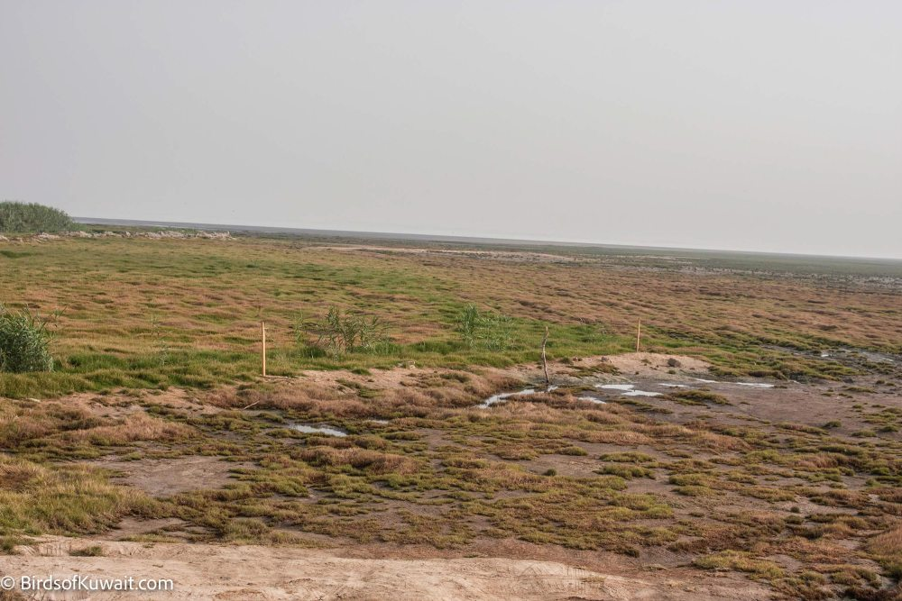 Jahra East Outfall