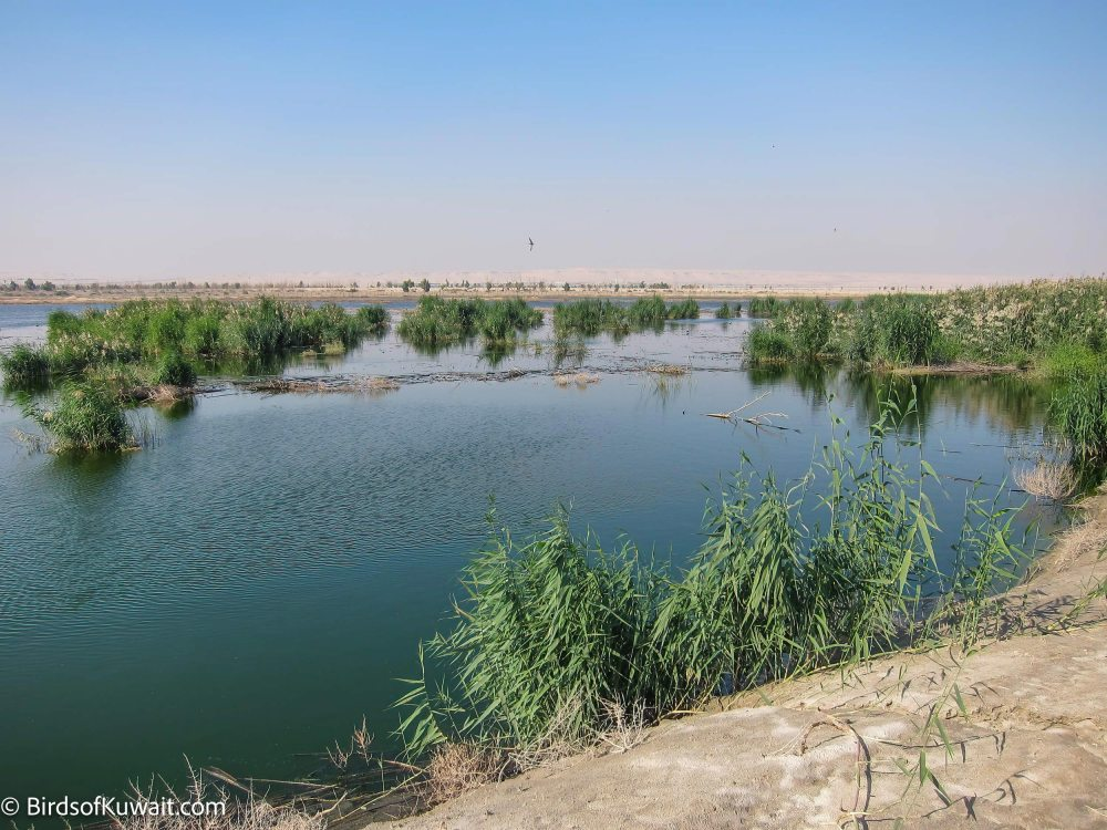 Jahra Pools Reserve
