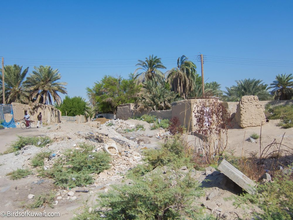Jahra Traditional Farms general view