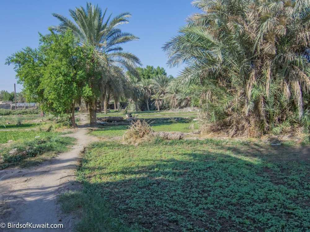 Jahra Traditional Farms