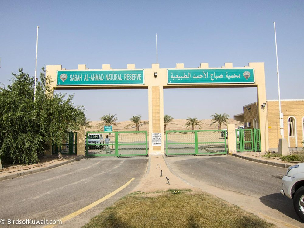 Sabah Al-Ahmad Natural Reserve, the main gate to the desert section