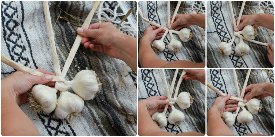 How to braid garlic: Illustrated