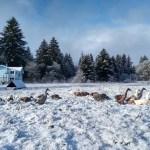 Preparing for 2019 at Birdsong Farm
