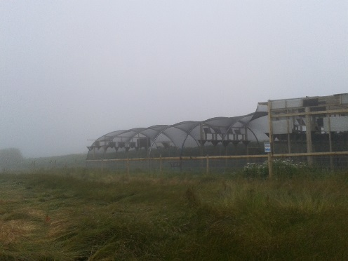 Sorel fog, July 2013. Photo by Liz Corry