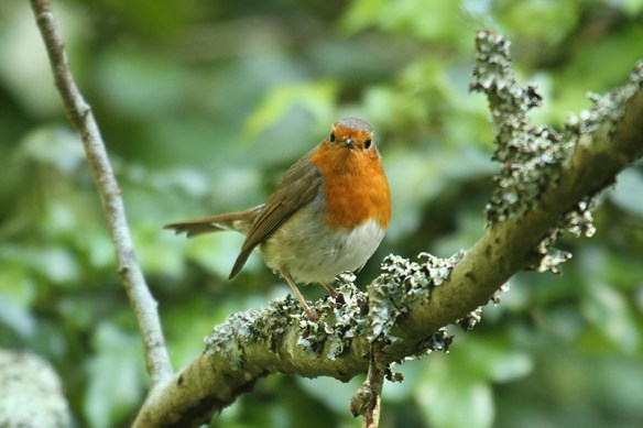Robin (4). Photo by Mick Dryden