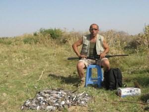 Turtle dove hunting