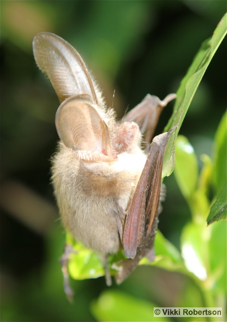 Bat 6 VR