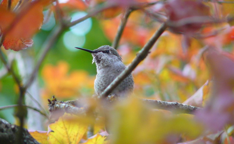 Portland Or Fall Had Wallpaper Top 10 Ways To Help Birds In Fall 187 Bird Watcher S Digest