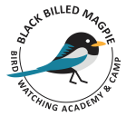 Black Billed Magpie Picture