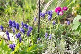 Garten im April -5855