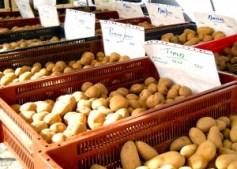 Många olika sorters sättpotatis brukar finnas på Kungstorget