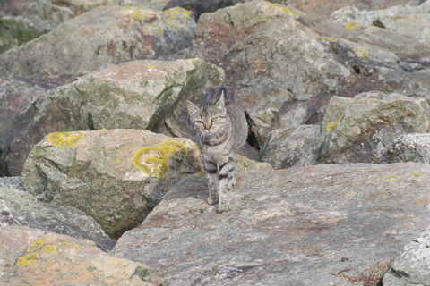 Bild: Halbwilde Katze im Hafen von Cherbourg. Nikon D90 mit Objektiv AF-S DX VR Zoom-Nikkor 18-200mm f/3.5-5.6G IF-ED.