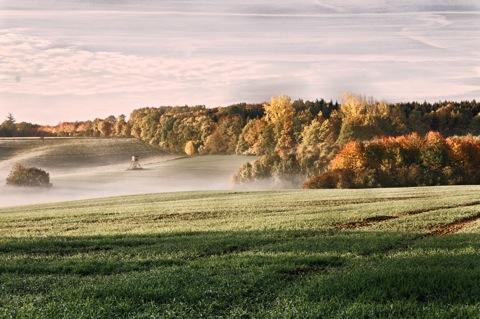 Bild: Herbstliche Morgenstimmung bei Saurasen, Mansfeld-Südharz.
