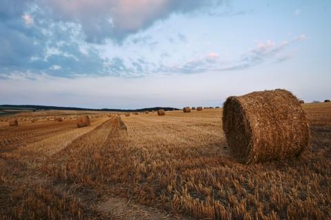 Bild: Morgenstimmung auf einem abgeernteten Getreidefeld bei Gorenzen im Unterharz. NIKON D700 mit CARL ZEISS Distagon T* 2/25 ZF.2. ISO 400 ¦ f/16 ¦ 25 mm ¦ 1/25 s ¦ kein Blitz. Klicken Sie auf das Bild um es zu vergrößern.