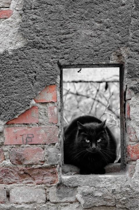 Bild: Schafstädt - Schwarze Katze im Fenster einer Bauruine auf dem Marktplatz. NIKON D700 mit AF-S NIKKOR 24-120 mm 1:4G ED VR. ISO 800 ¦ f/5,6 ¦ 120 mm ¦ 1/40 s ¦ kein Blitz. Klicken Sie auf das Bild um es zu vergrößern.
