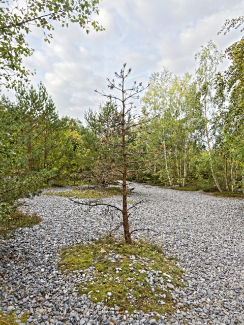 Bild: Unterwegs auf den Feuersteinfeldern zwischen Neu Mukran und Prora auf der Insel Rügen. Klicken Sie auf das Bild um es zu vergrößern.