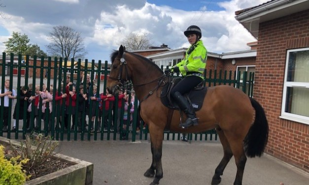 Meeting Woody – the South Yorkshire Police Horse