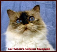Birman Color Chart