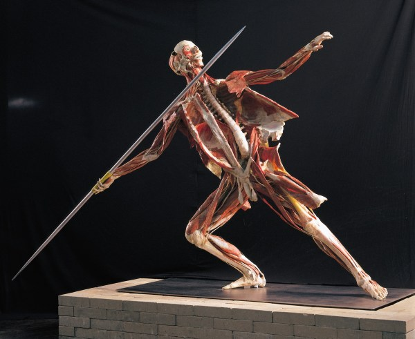 Body Worlds - Greater Birmingham Convention