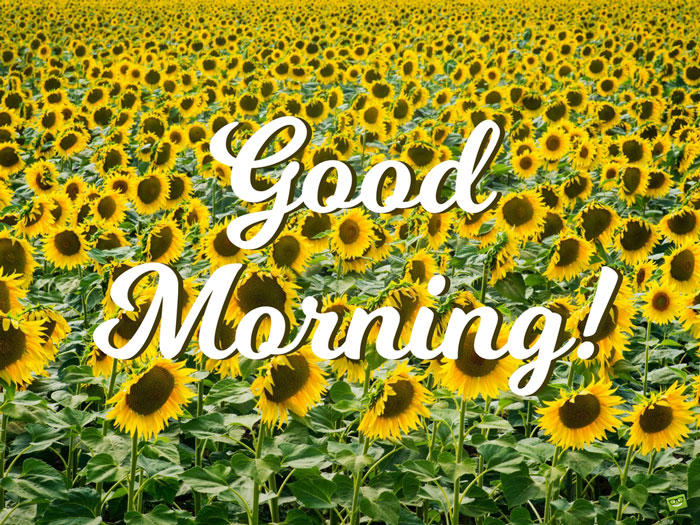 Start Your Day With A Smile Floral Cards