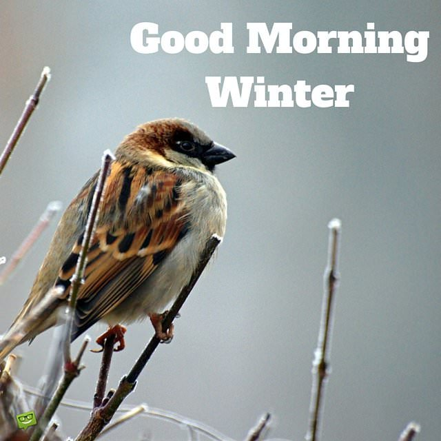 Hello Winter! Quotes And Images To Share