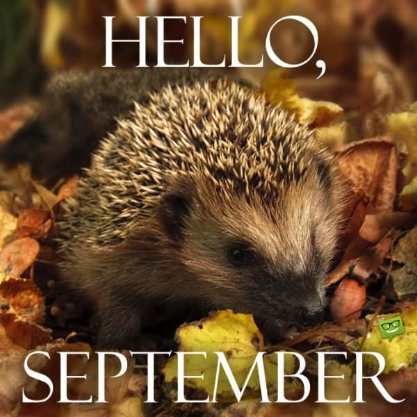 Hello September Inspired Quotes For A Productive Autumn