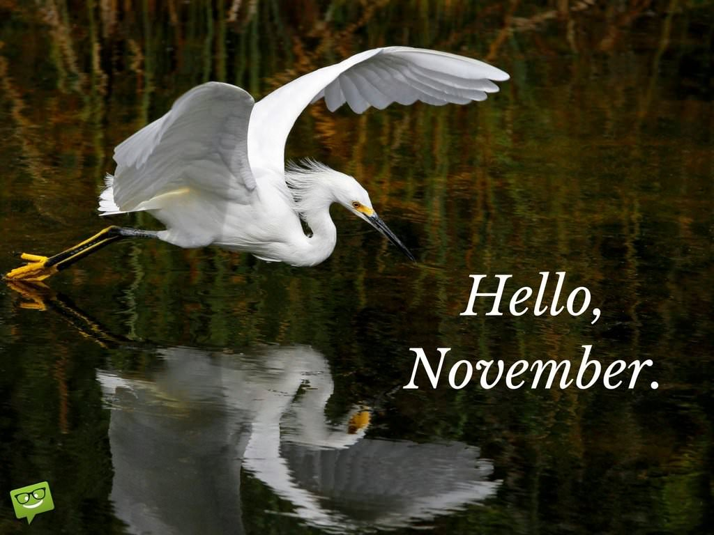 Falling Down Wallpaper Hello November Quotes For The Month Of Gratitude