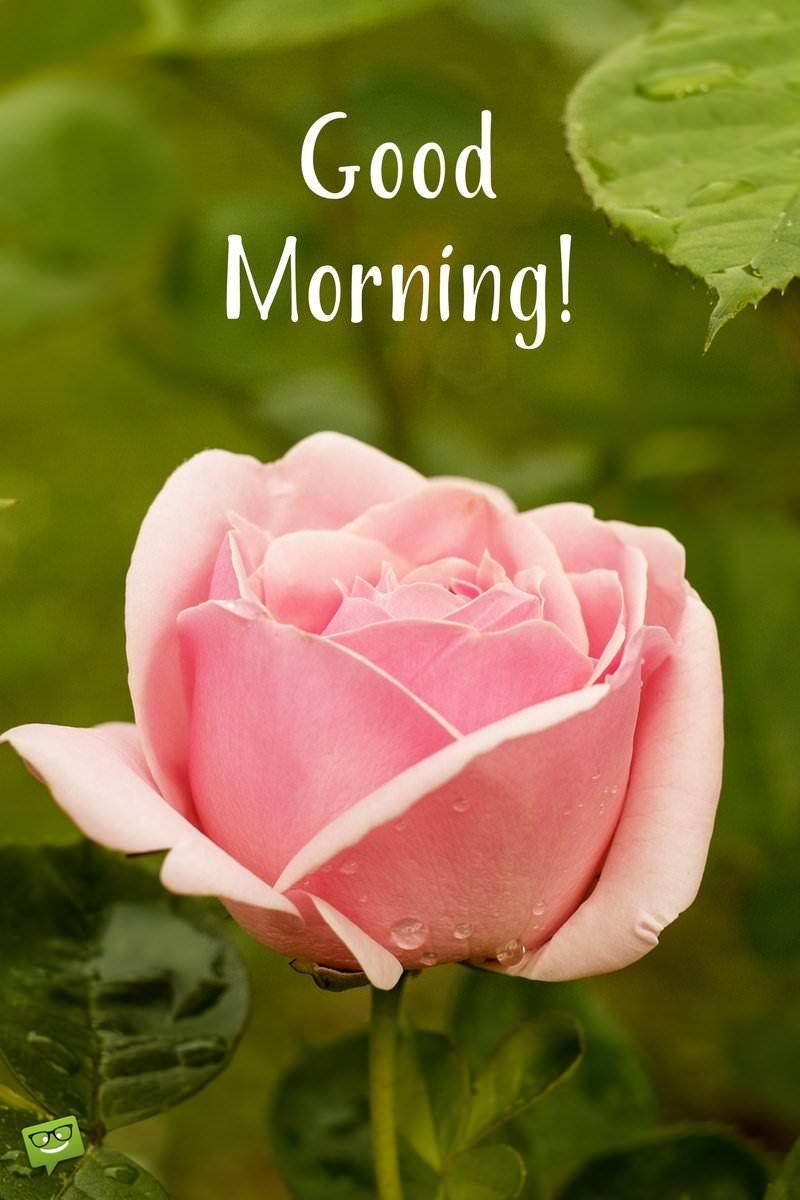 good morning wish on