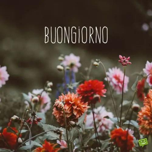 Good Morning In Italian Buongiorno